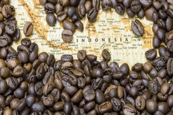 دانه قهوه اندونزی