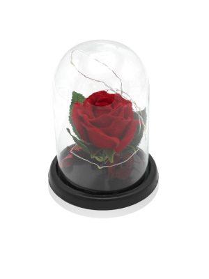 گل رز چراغ دار